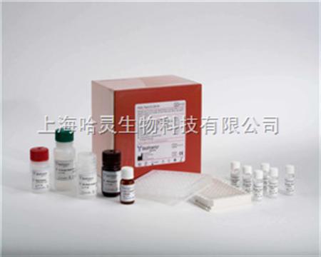 人白细胞介素-2(il-2)elisa