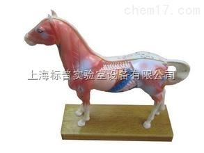 马针灸模型|中医专科训练模型