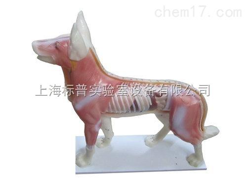 狗体针灸模型|中医专科训练模型