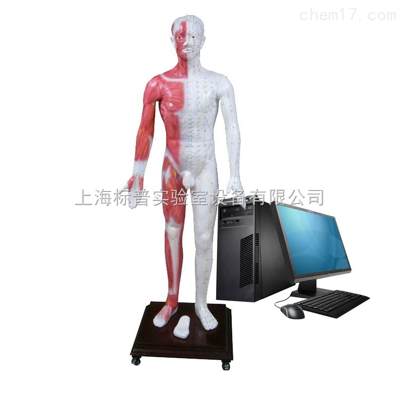 多媒体人体针灸穴位发光模型 中医专科训练模型