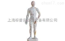 人体针灸模型 70CM|中医专科训练模型