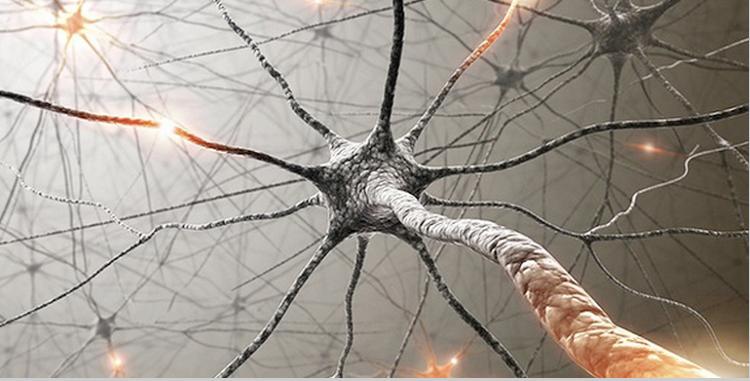 【中国化工仪器网 技术前沿】导读:近日,来自加州大学洛杉矶分校的研究人员通过利用小鼠进行研究,他们发现,脊髓损伤后疤痕组织的形成实际上会促进神经细胞的再生,而这或将帮助科学家们开发新型方法来进行脊髓损伤的修复。   长期以来,神经科学家一直认为瘢痕组织是通过神经胶质细胞形成的,神经胶质细胞是中枢神经系统中围绕在神经元周围的特殊细胞,当大脑或脊髓受损时其可以阻碍损伤的神经细胞继续生长,因此难怪研究者们会假设如果他们寻找到一种移除或中和疤痕组织的方法,那么损伤的神经元细胞或许就会进行自我修复。