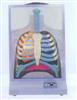 GD/A13015电动人体呼吸系统模型