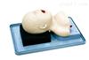 KAH-15/1新生儿气管插管训练-模型